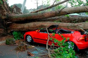 car under tree